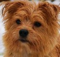 MuttDay-icon