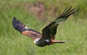 BirdDay-falcon
