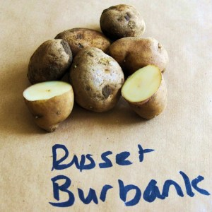 Burbank-02russets