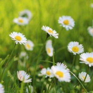 wildflowers-01