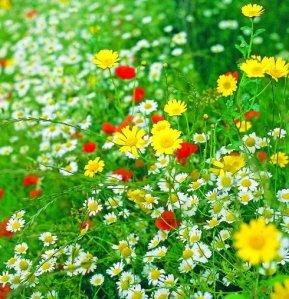wildflowers-02