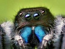 spider-03jumper