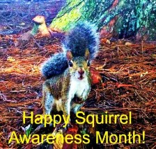 SquirrelAwareness-01