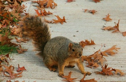 SquirrelAwareness-03