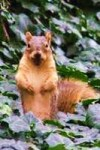SquirrelAwareness-04icon