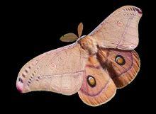 moths-02