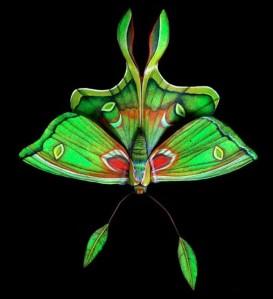 moths-03
