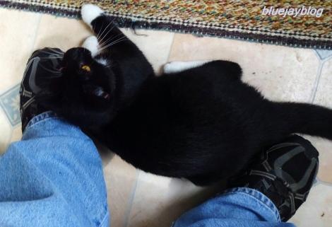 cat-02randomkitty082416h