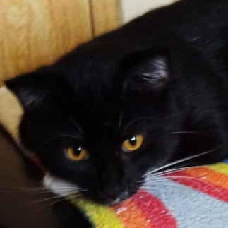 cat-03081516