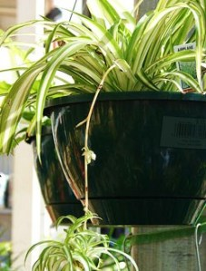 IndoorPlants-03
