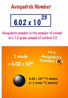 mole-01
